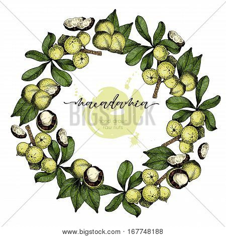 Vector set of hair care ingredients. Organic hand drawn colored elements. Macadamia nuts wreath.cosmetic package shop store products spa salon wellness program procedure skin beauty