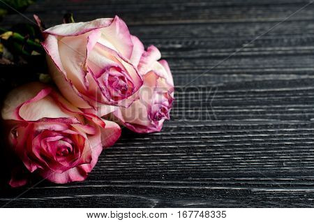 Three beautiful dry roses against an aged wooden background with copy space for your text