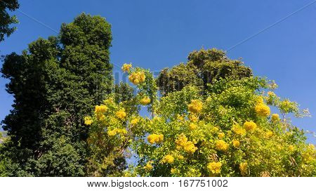 Beautiful and uncommon trees in botanical garden in Luxor city in Egypt
