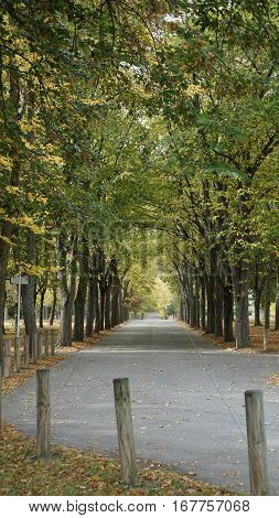 An empty road in early autumn season