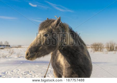 Laska is a two years old horse. Front photo