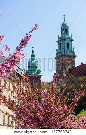 Towers of the Cathedral of Wawel with a Pink Sakura cherry blossoms. Krakow Poland.