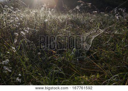 Foggy autumn morning in a meadow. A dewy spiderweb.