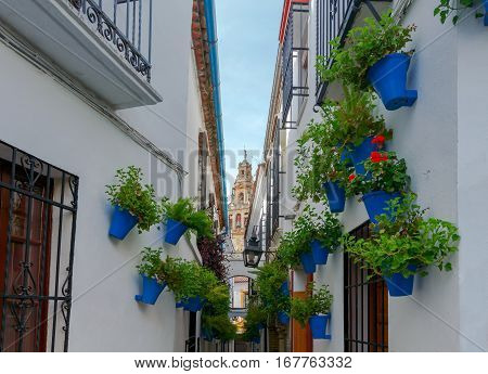 Flowers in a flowerpot on the white walls, the famous Flower Street and Bell Tower Mezquita in Cordoba at night. Andalusia. Spain.