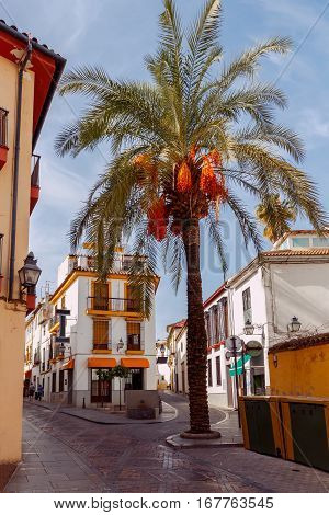 Narrow street with traditional Spanish architecture in Cordoba. Spain. Andalusia.