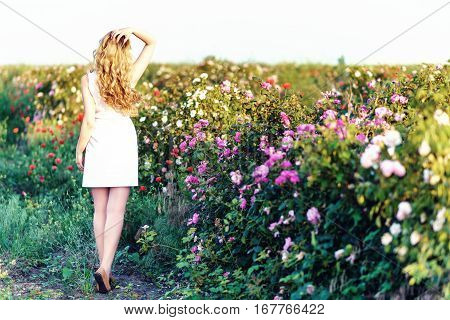 Girl dancing in a field of roses. Springtime flowers garden. Young woman white dress with beautiful long curled hair. Photo from the back