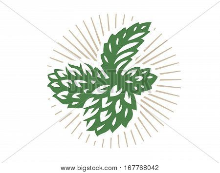 Hop - vector illustration, design on white background