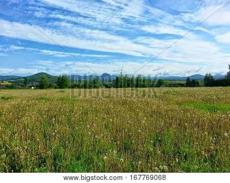 The blooming meadow with nice blue sky with dispersed clouds by sunny day. The Czech nature. Hills and trees in the background.