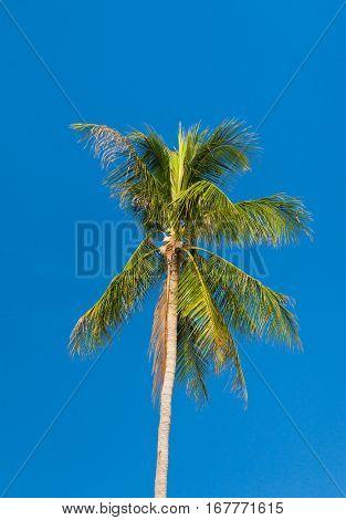 Exotic Getaway on Idyllic Island