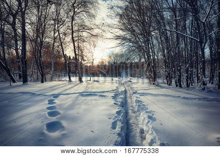 Beautiful winter scenery with trees in the snow. twillight