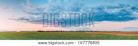 Natural Sunset Sunrise Over Field Or Meadow. Bright Dramatic Sky Over Green Ground. Countryside Landscape Under Scenic Sky At Sunset Dawn Sunrise. Skyline, Horizon. Panorama