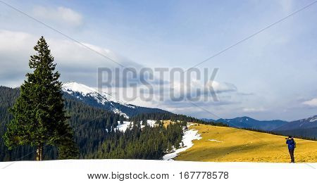 Lonely photographer in mountains taking the picture of a lonely pine tree in winter day