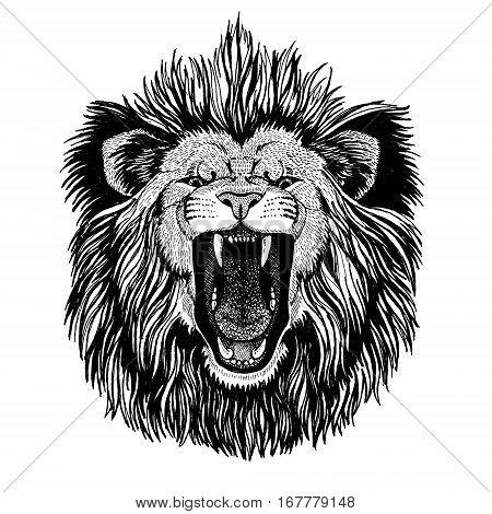 Wild cat King lion Roaring lion Hand drawn image