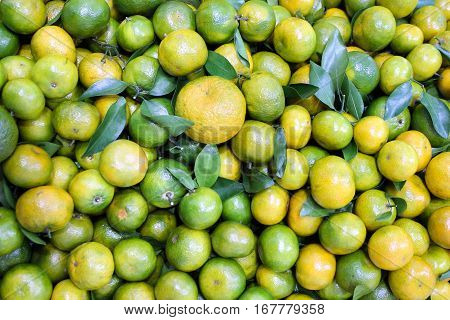 Ripe lemons southern citrus closeup. Photography Wallpaper