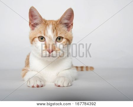 Cute Yellow Tabby Cat On White
