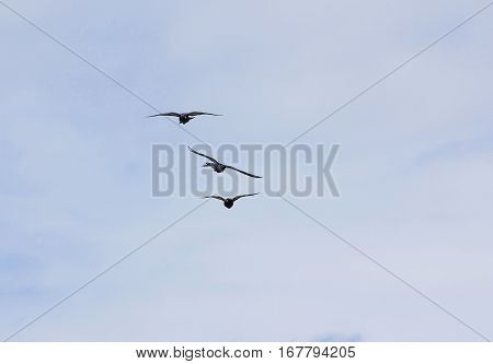 a group of birds flying in the sky against the clouds in the beginning twilight