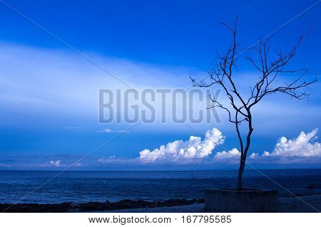 Black tree silhouette on sea background. Peaceful seaside during sunset. Dry tree with naked branches. Dark blue seawater. Bright sky with white fluffy cloud. Evening on exotic island. Abandoned beach