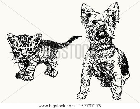 Hand drawn kitten and yorkshire terrier.