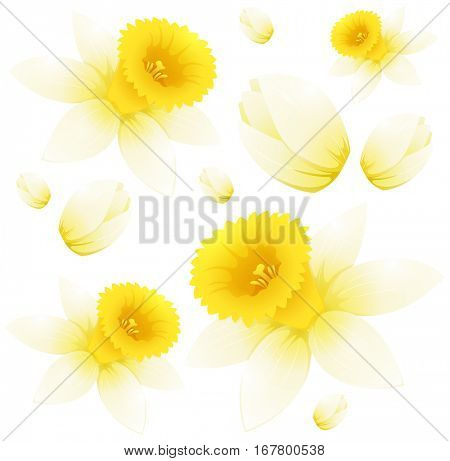 Seamless background design with daffodil flowers illustration