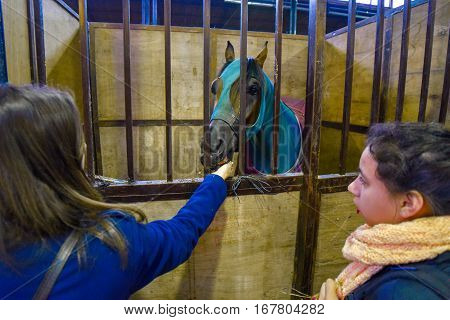 Buenos Aires, Argentina - Jul 16, 2016: Horse feeding covered with a blue blanket in a stable at the La Rural.