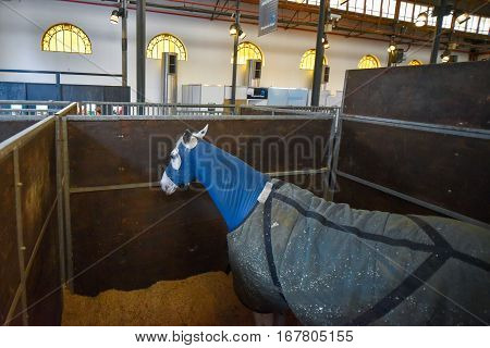 Buenos Aires, Argentina - Jul 16, 2016: Horse covered with a blue blanket in a stable.