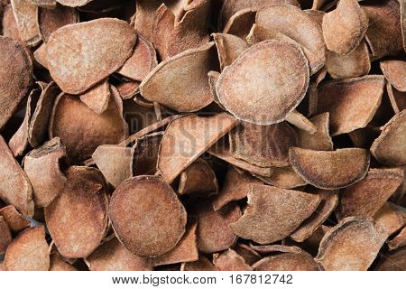 Curcuma comosa Roxb. or Curcuma latifolia Roscoe roots which is part of ZINGIBERACEAE family useful thai herb for lady menstruration treatment