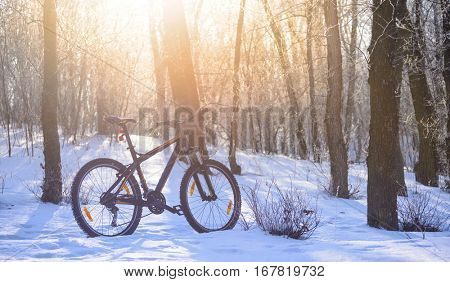 Mountain Bike on the Snowy Trail in the Beautiful Winter Forest Lit by the Sun