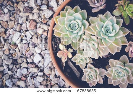 agave succulent plant with copy space stone background selective focus toning