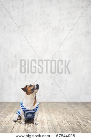 Small dog in studio