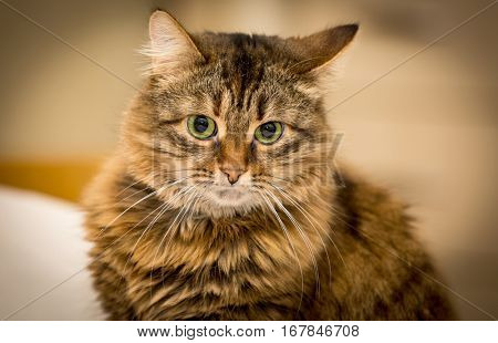 Portrait of serious funny cat