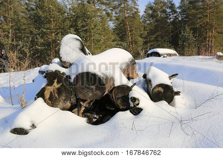 old wooden logs under snow in forest