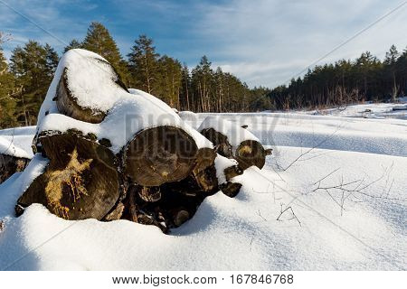 old wooden logs on winter meadow in forest