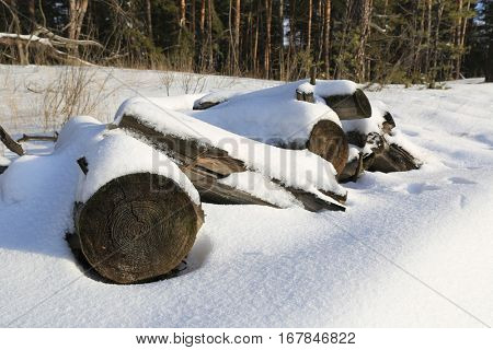 logs under snow on meadow