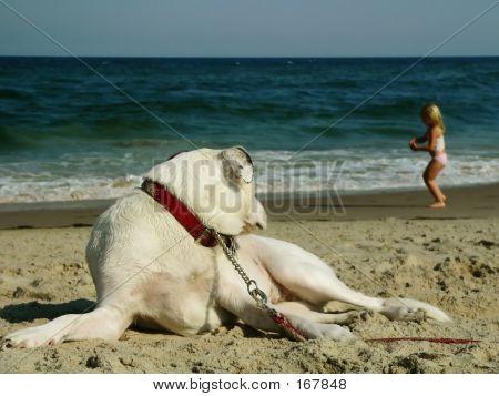 Pet Dog Watching Girl