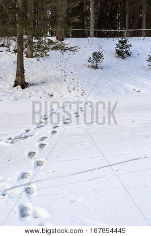 winter landscape and traces on snow on a glade in the forest park