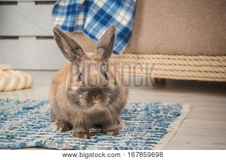 sweer bunny in the flat specially for easter time