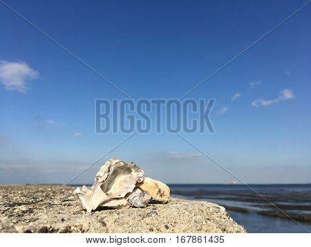 Shellfish above the embankment on blurred blue sky background
