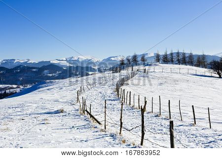 Isolated Trees In Winter Landscape In The Mountains