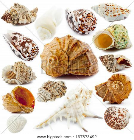 Sea shell collection isolated on white background