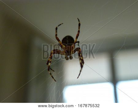 Dark silhouette of a spider next to a window
