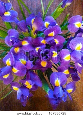 Beautiful purple and yellow iris flower pattern on a wooden brown background.