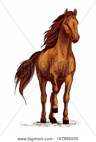 Horse vector sketch. Arabian mustang standing on ground and stomping or stamping with hoof. Brown wild or farm stallion symbol for equestrian racing sport, horse riding races club, equine exhibition poster