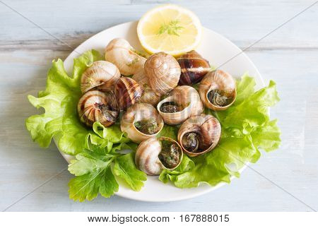 Snails with garlic on the plate food concept