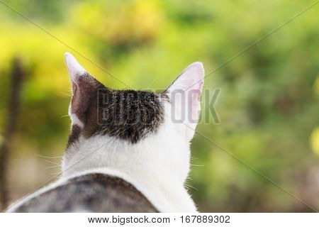 Portrait of cute Thai cat on green nature background