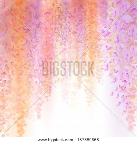 Spring background with blooming wisteria. Beautiful pink flowers on a white background