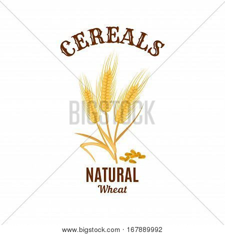 Cereals icon. Vector isolated wheat ear plant. Bread food, flour or beer natural ingredient barley, oat or rye. Agriculture or farming cereal reap harvest with grain seeds. Design for bakery or healthy porridge nutrition