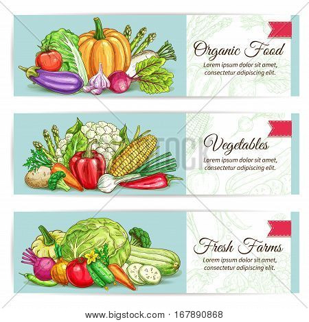 Vegetables banners set of vector cauliflower and asparagus, kohlrabi and radish daikon, corn and garlic, zucchini and beet, pumpkin, broccolim, bell and chili pepper, leek, pumpkin, eggplant and pea
