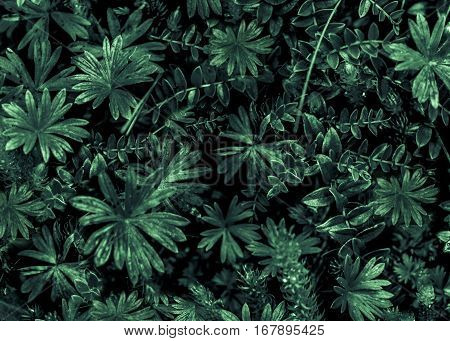 Top view shot of flora detail high contrast photo in dark vivid green and black tones