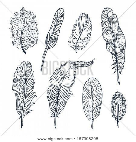 Set of sketched feathers. Free hand drawing