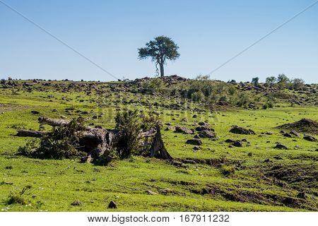 Scenic African savannah landscape in Masai Mara, Kenya